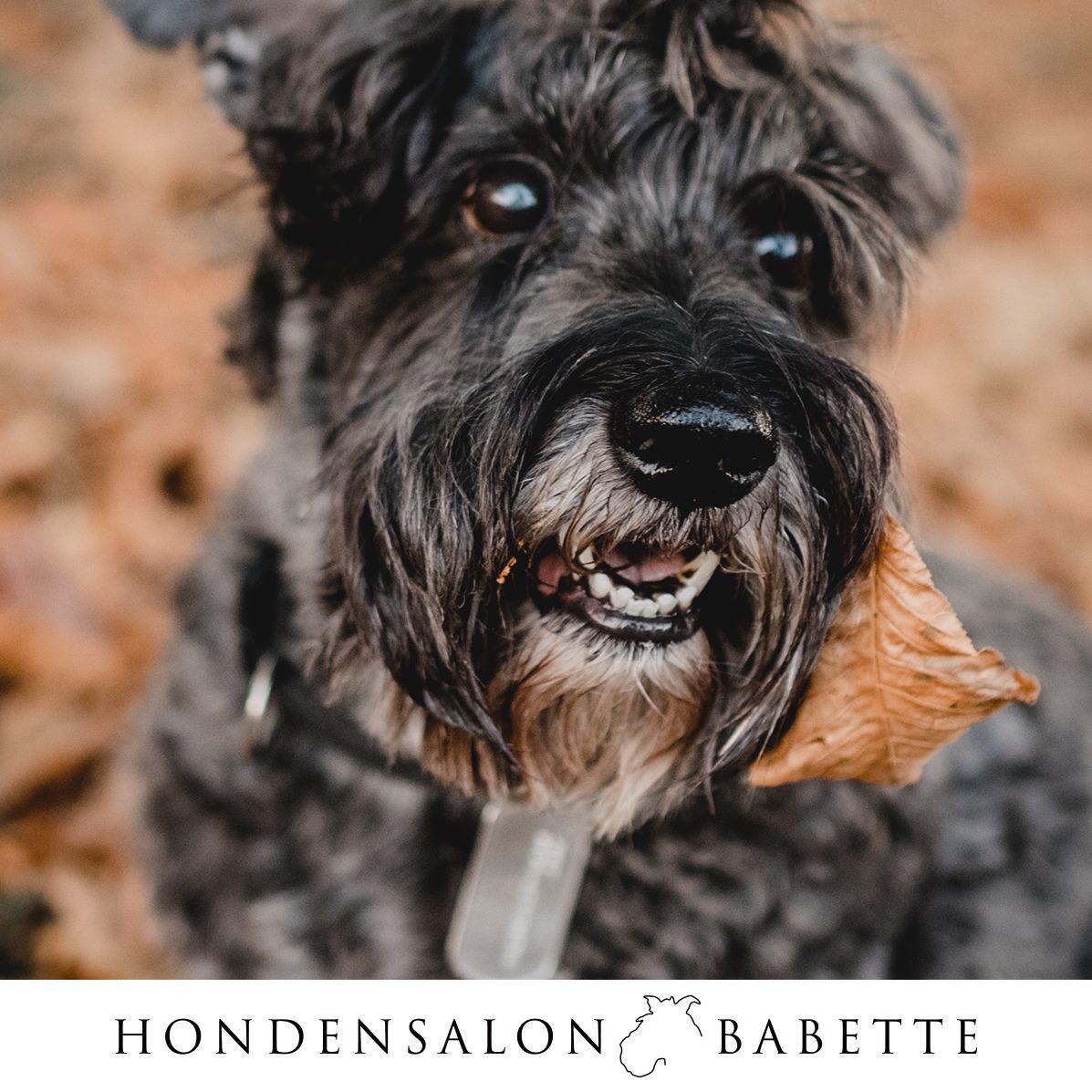 Hondensalon Babette